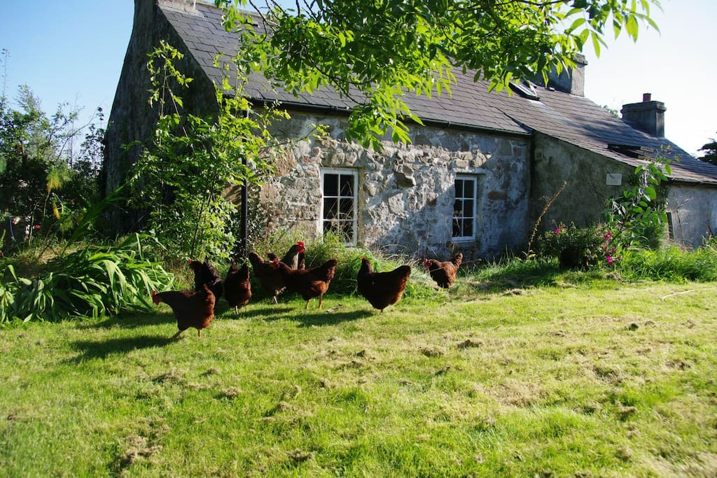 The backyard of Tullyquilly Cottage and some local residents.