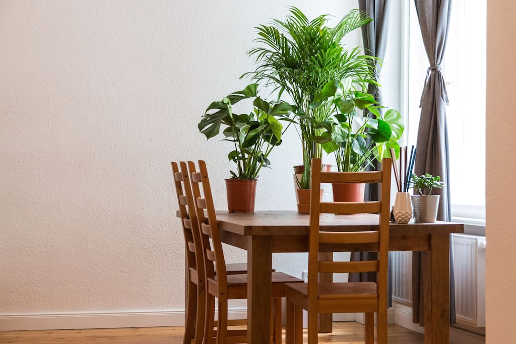 There's a large table for working and beautiful green plants to feel inspired.