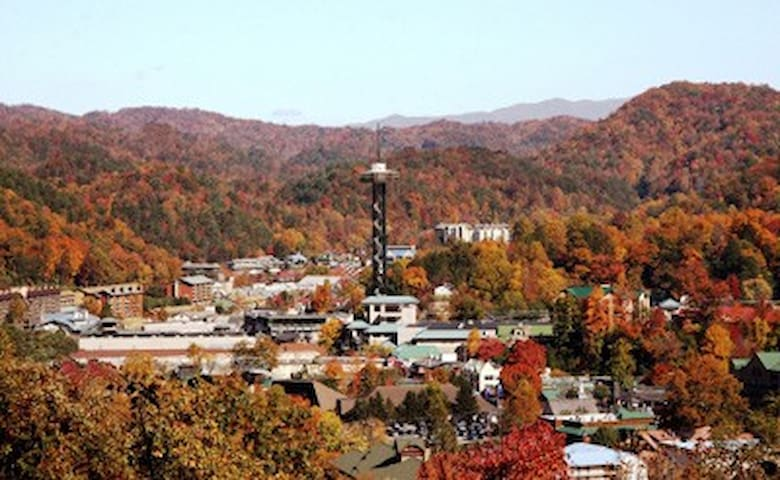 Amazing view of downtown during fall - you will fall in love