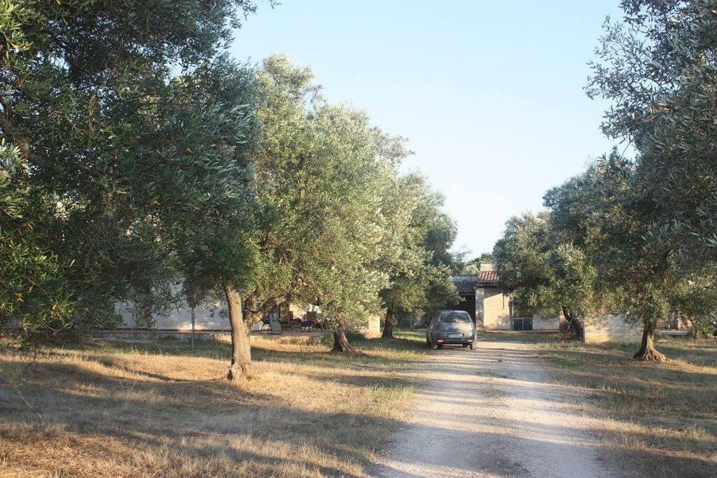 Zufahrt zu den beiden Ferienhäusern