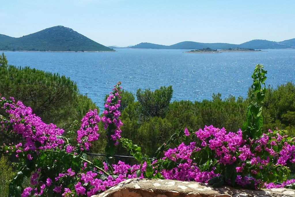 Bouganvillea flowers and pine woods and extraodinary view