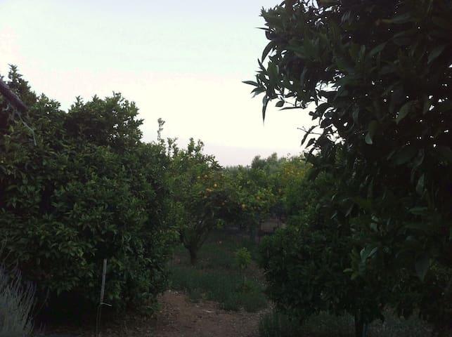 Vounaki Orchard