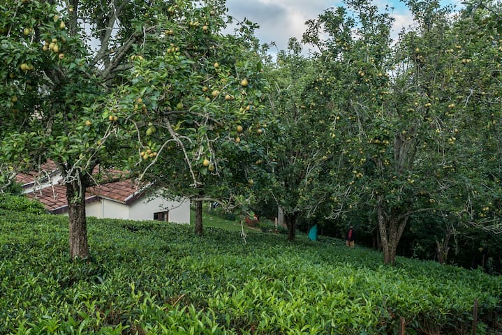 Plantation Stay in Kotagiri W/ baking experience