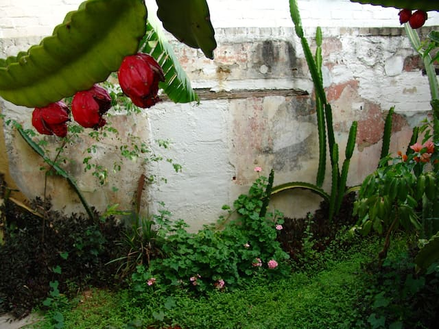 In the Heart of Historical Oaxaca - Oaxaca - Apartemen