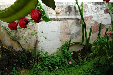 In the Heart of Historical Oaxaca - Oaxaca - Apartment