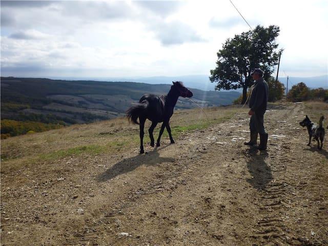 the farm - monterufoli horse