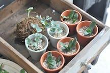 Shop Section-mini succulents for sale.
