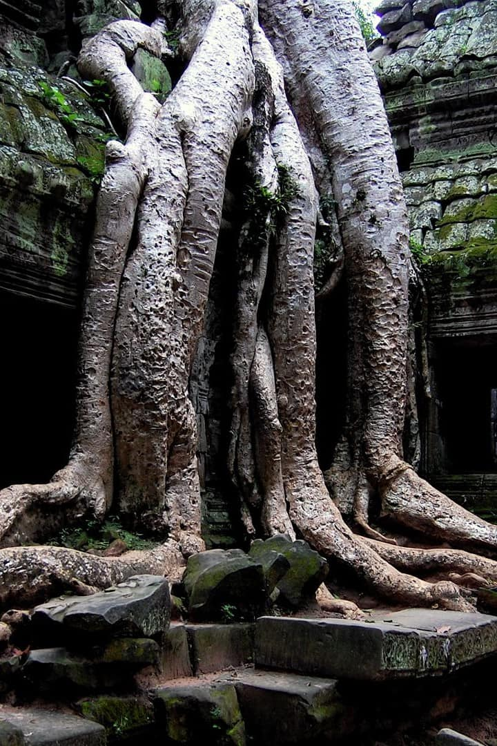 Tree Temple Taprom