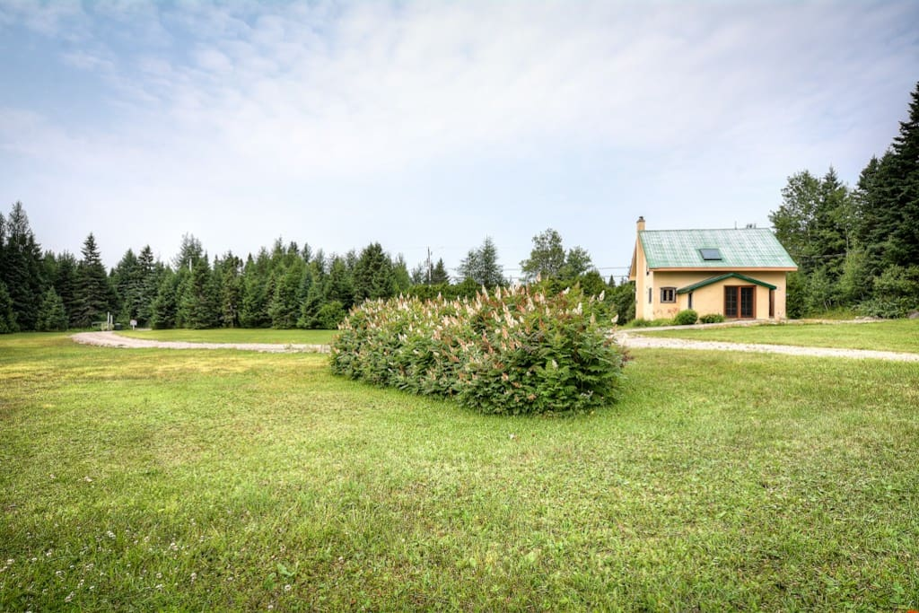 An amazing backyard! Acres of forest to discover