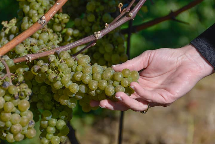 Learn about grape growing