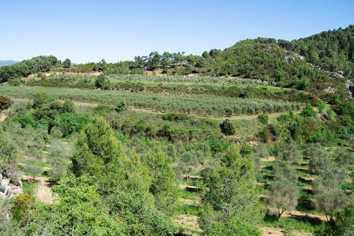 Campos de olivos que rodean la finca