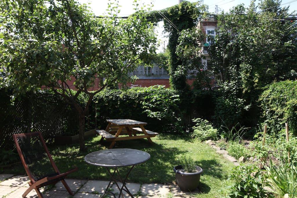 Peaceful and sunny garden / charmant jardin calme et ensoleillé