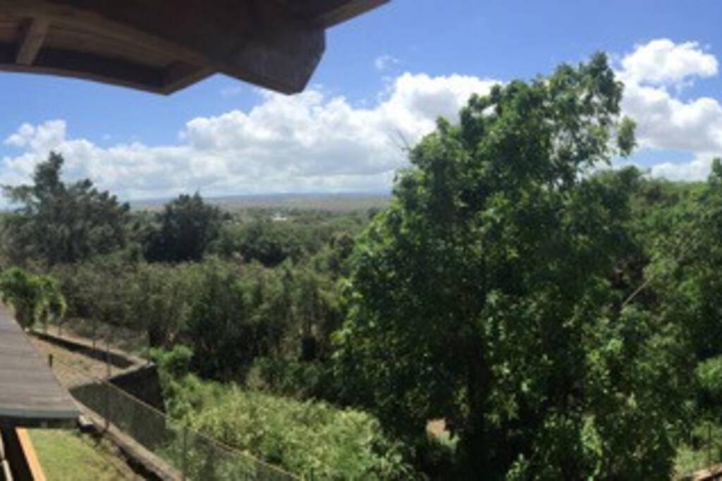 Farm views