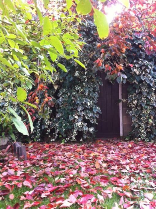 El palosanto en otoño nos da deliciosos caquis.