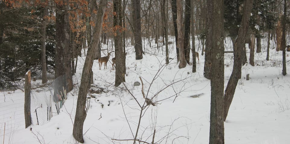 How many deer can you spot!?