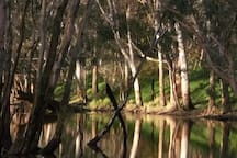 The billabong on the farm near Tolka Cottage, complete with platypus and frogs, in a wet year.