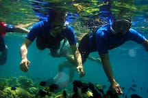 snorkelling in Unawatuna