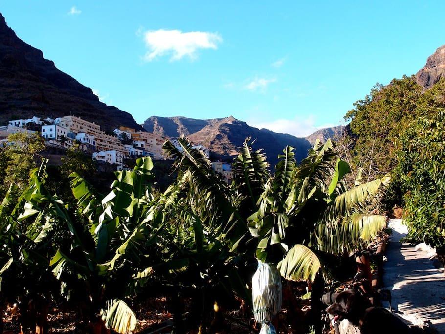 casa mango bungalows zur miete in valle gran rey kanarische inseln spanien. Black Bedroom Furniture Sets. Home Design Ideas
