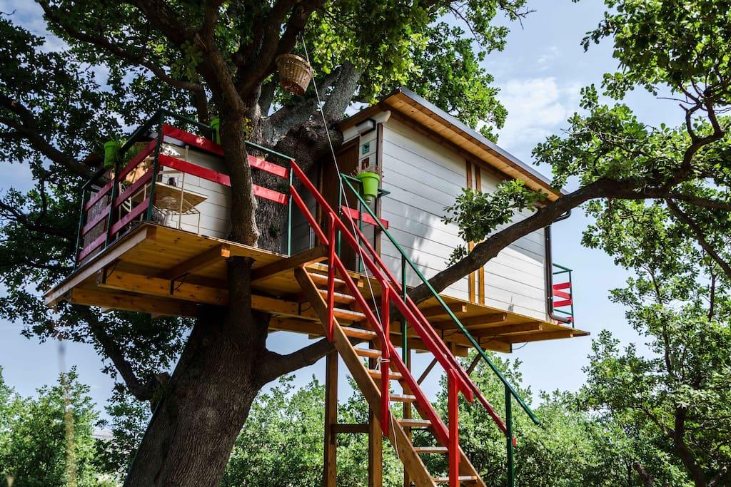 La casa sull 39 albero treehouses for rent in lentella for Kit per costruire casa sull albero