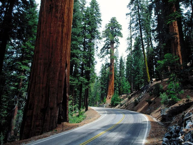 OPO.F.Sp (Seq) Sequoia Park Exclusive Guided Tours