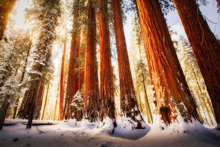 Sequoia Park Exclusive Guided Tours - Bakersfield - Huis