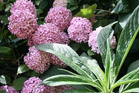Friendly + garden, Clapham-Brixton - London - House