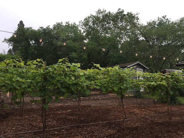 Hidden Vineyard Oasis near Downtown