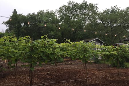 Hidden Vineyard Oasis near Downtown - Denton - Autre