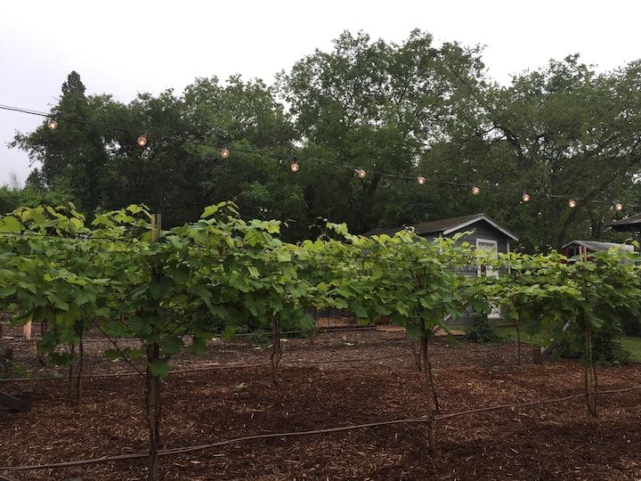 Hidden Vineyard Oasis near Downtown