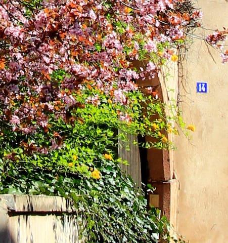 Maisonnette au cœur d'un village viticole - Andlau - House