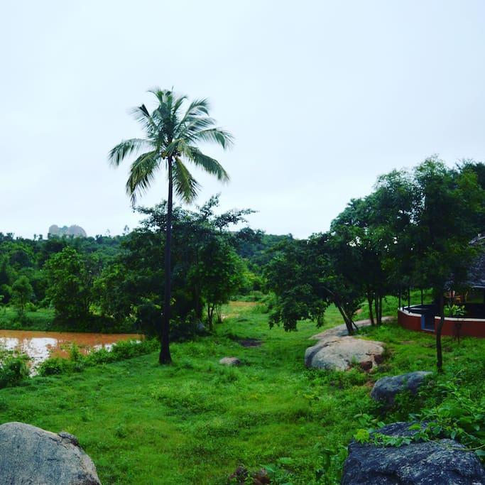 Rainy Kodikallu