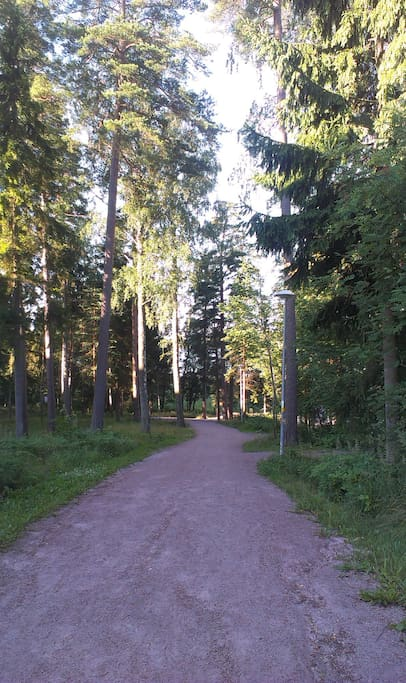 Forest path close to the beach.