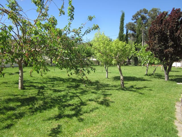 Fruittrees in our garden