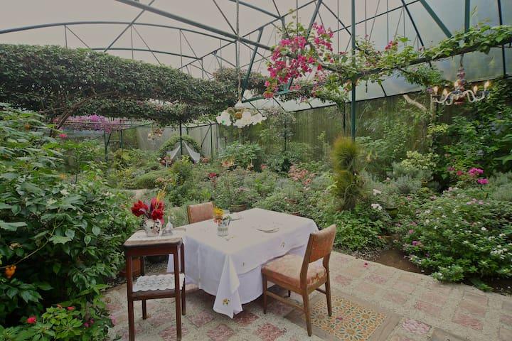 Primrose Cottage at Sonya's Garden - Alfonso - Bed & Breakfast