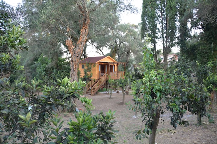 Athina's Treehouse