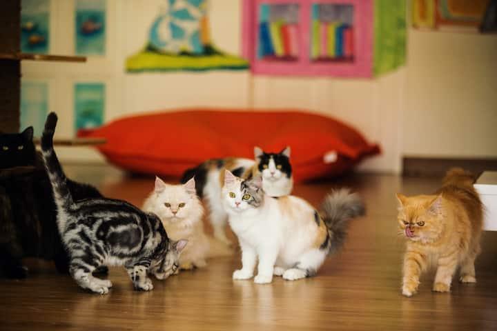 中泰第一家猫咪主题酒店,不临街有阳台带电梯