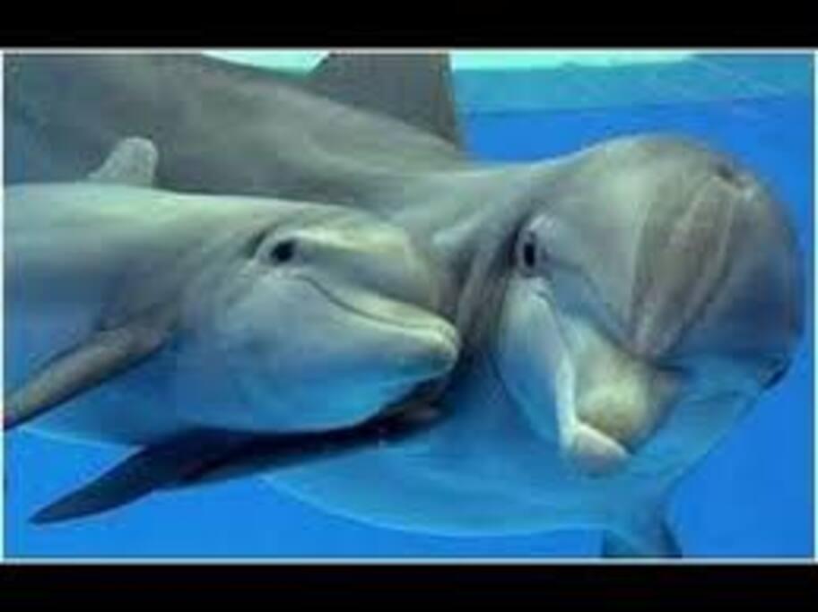 Golfinhos no Rio Sado ; ) ®