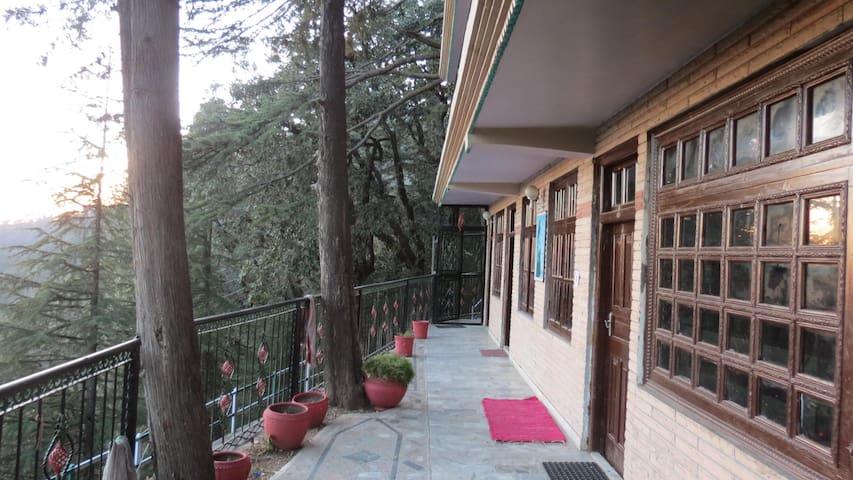 Cedar Tree B&B - Shimla - Ev