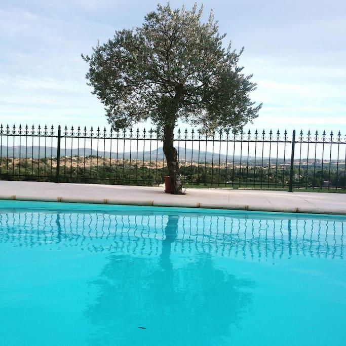Piscine et olivier