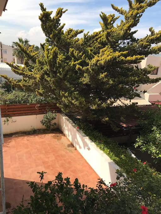 Back yard/ terrace