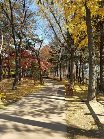 Take a view of Seoul-Namsan Tower and small park.