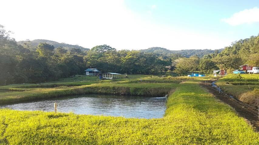 Granja En Río Piedras