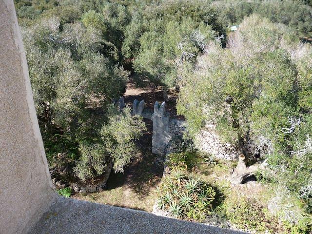 Tour Pisane dans l'oliveraie de casella