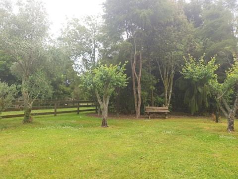 Kereru Cottage - Unique countryside cottage