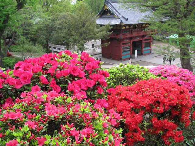 Cozy Hilltop.Green view AKB Ueno Tokyo dome - Bunkyo - Casa
