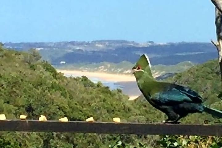 Feed the Knysna Loerie and observe rich bird life on your balcony... up close and personal.