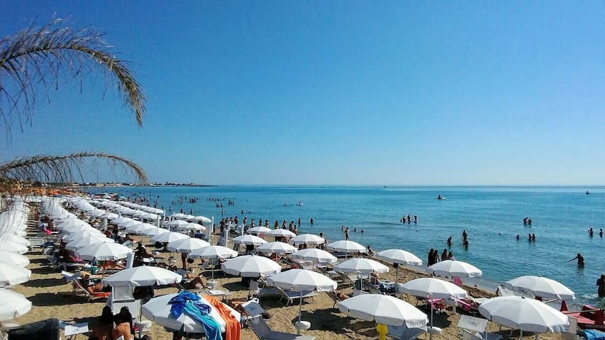 Tiburon beach Lido Signorino