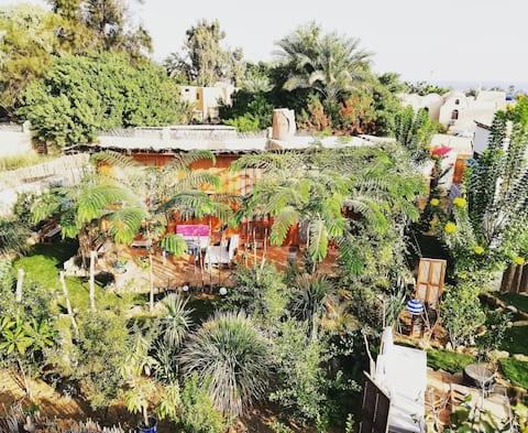 Barfodet af Barfodet i Tunis