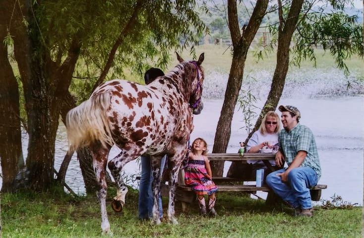 Rustic Charm on a Horse Farm - Quarter Horse Room