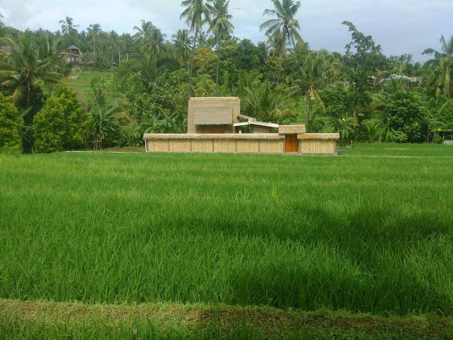 In The Middle of Paddy Fields